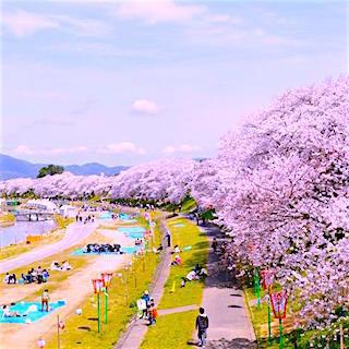 岡山 さくらカーニバル.jpg
