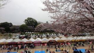 岡山城 と 桜 絶景DSC_0316 aa.JPG