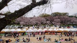 岡山城 と 桜 絶景DSC_0428 aa.JPG