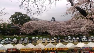 岡山城 と 桜 絶景DSC_1883 aa.jpg
