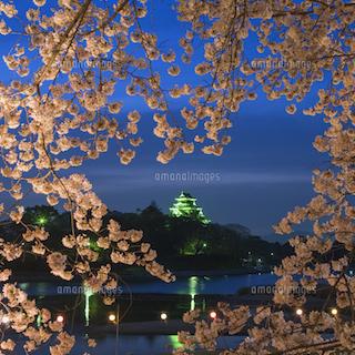 岡山城 と桜 ライトアップ.jpg