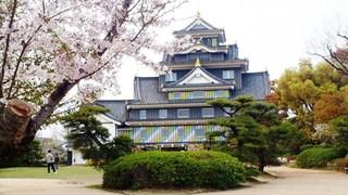 岡山城 ポップ 桜DSC_1930 - コピー のコピー.jpg