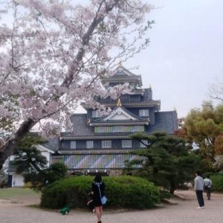 岡山城とさくら DSC_0665 - コピー - コピー のコピー.JPG