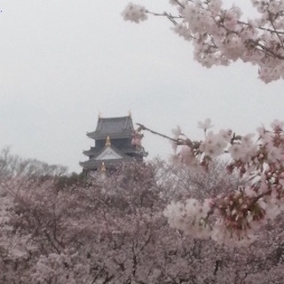 岡山城と桜.JPG