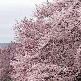 岡山市・後楽園東側の旭川河川敷 0x.JPG